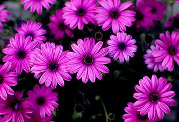 flower6a