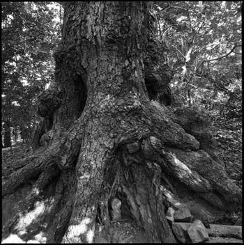 Bigtree01