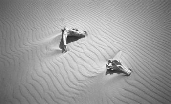 Sand02b